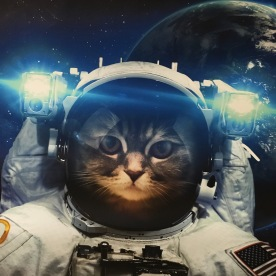 Houston, we have a problem: Meow